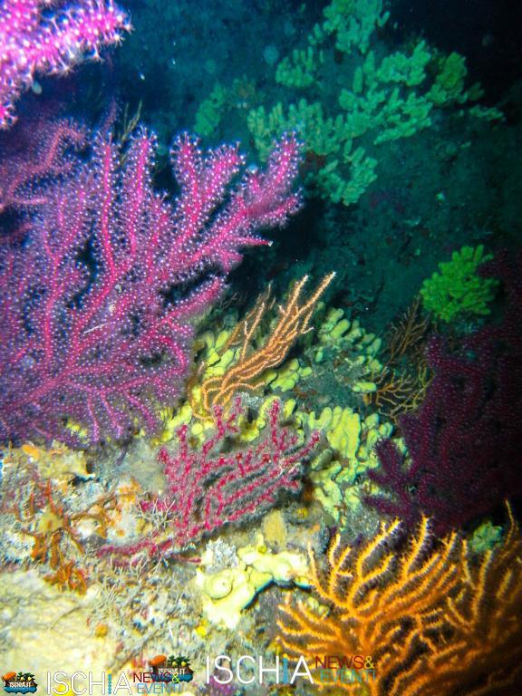 Diving_Sub_Ischia_mare-1003