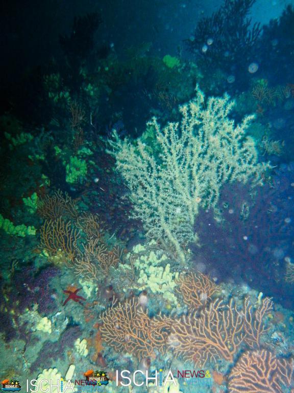 Diving_Sub_Ischia_mare-1006