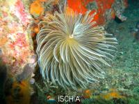 Diving_Sub_Ischia_mare-0912
