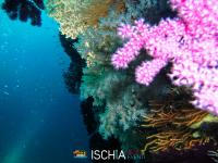 Diving_Sub_Ischia_mare-1024
