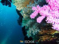 Diving_Sub_Ischia_mare-1024