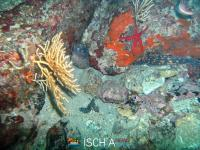 Diving_Sub_Ischia_mare-1049