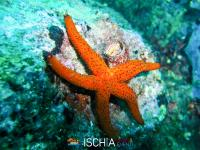Diving_Sub_Ischia_mare-13